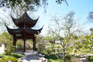 Huntington Gardens Chinese Garden | SET on Life